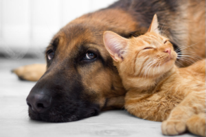 Tierkommunikation & vermisste Tiere